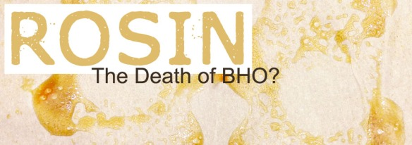 rosin the death of bho